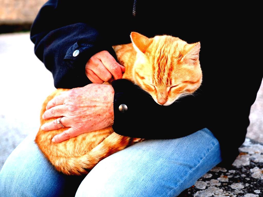 Acompañar a tu Gato en sus últimos momentos