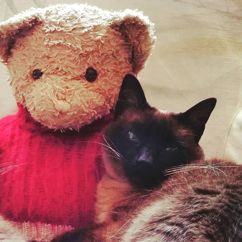 El Duelo de mi Gato - The Mourning of our Cat
