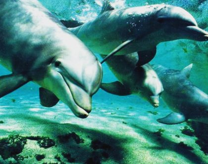 Reiki Delfines de Atlantis