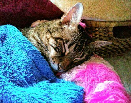 Mi Gato se refugia en el arenero