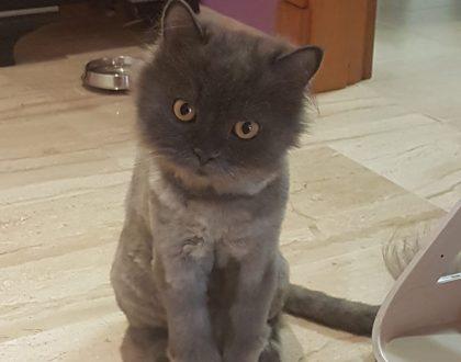 Trastornos depresivos en gatos