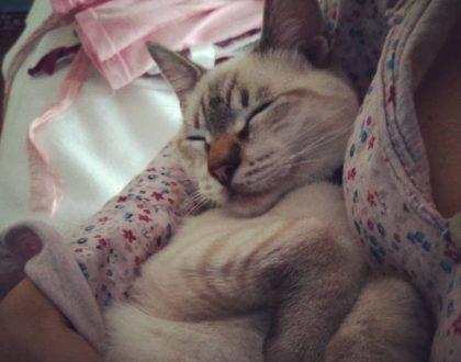 La serenidad del sueño de un Gato