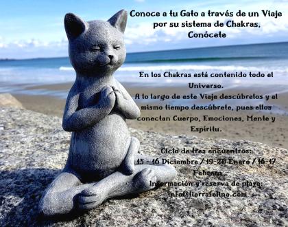 Curso online sistema de chakras en Gatos